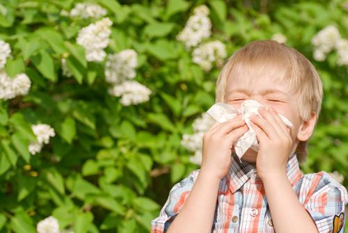 kijavica-alergeni