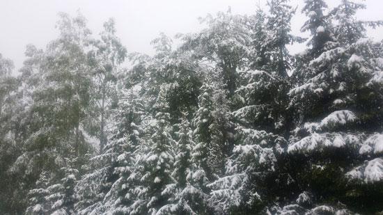 sneg-maj16