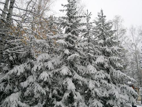 sneg-2013-2
