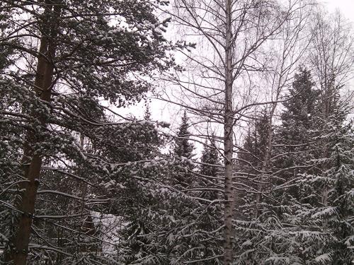 sneg-2014-2